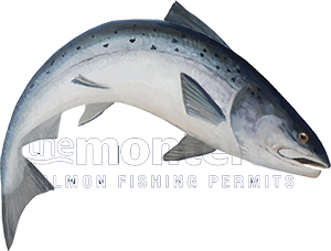 Salmon jumping logo copyright Jock Montieth