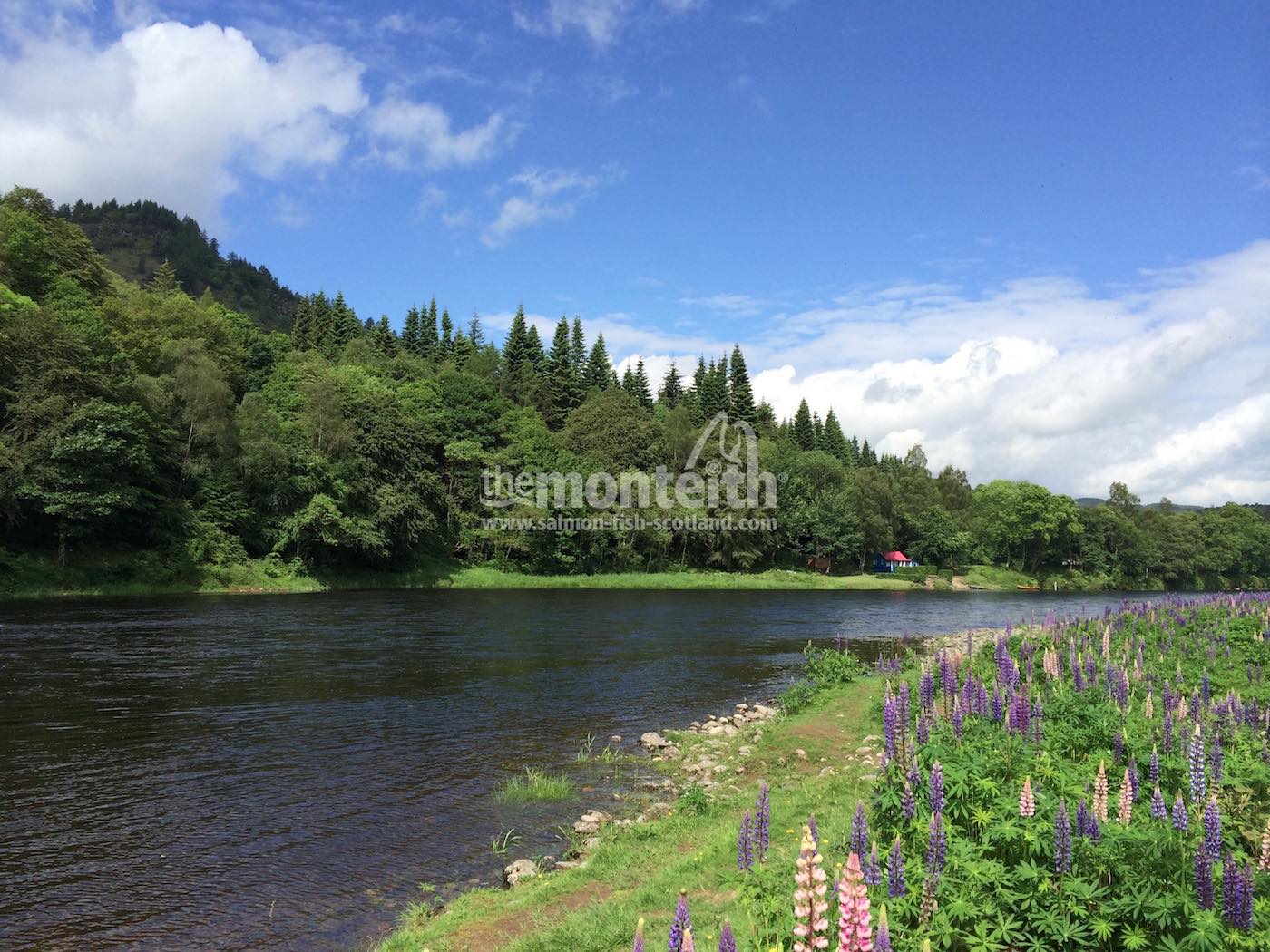 Newtyle Beat River Tay 1