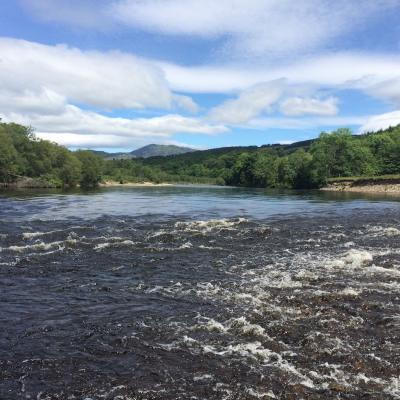 Colossal Scottish Salmon Runs